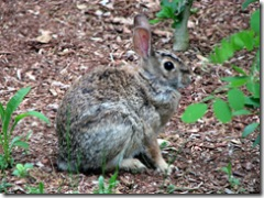 Animals - Bunny 1